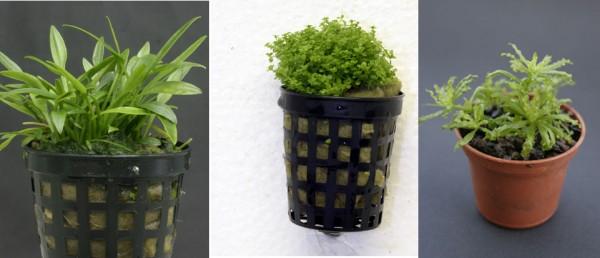 Pflanzensortiment Vordergrund