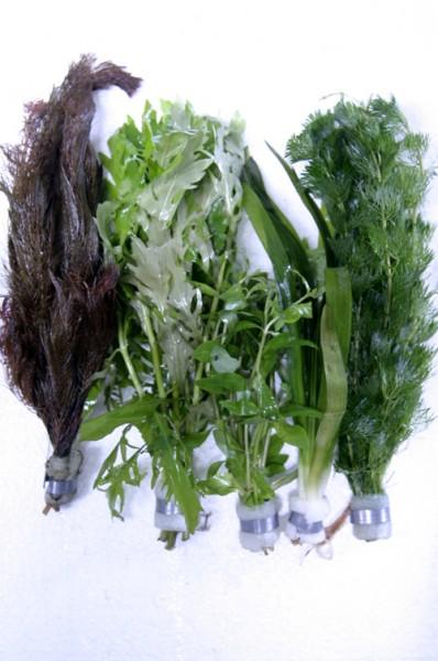 Sortiment Bundpflanzen - Bunter Mix - 12 Bunde